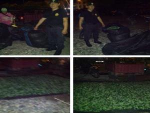 Aucayacu: PNP decomisó 250 de hoja de coca ilegal