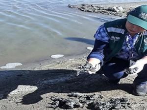 Puno: Investigan muerte de más de 10 mil ranas en río Coata