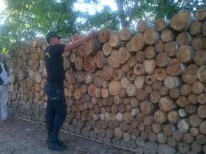 Leoncio Prado: Incautaron 25 mil pies tablares de madera