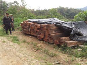 Tingo María: Incautaron cerca de 21 mil pies tablares de madera