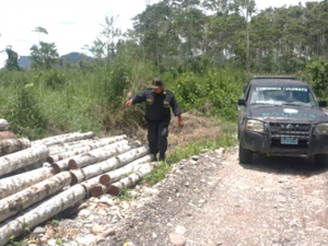 Leoncio Prado: Incautaron tres mil pies tablares de madera