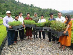 Vraem: Entregarán 530 mil plantones forestales