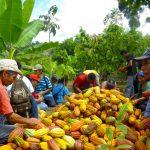 Vraem: Fortalecen cadena productiva y competitividad del cacao y café