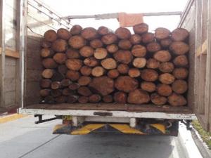 Tingo María: PNP incautó 5 mil pies tablares de madera