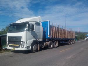 Tingo María: Incautaron más de 2 mil pies tablares de madera
