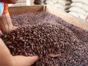 San Martín priorizará desarrollo de 10 cadenas productivas