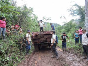 Pasco: Sernanp neutralizó tala ilegal en área protegida