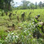 Corah sigue adelante con la erradicación de hoja de coca ilegal