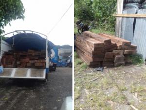 Tingo María: PNP incautó más de 14 mil pies tablares de madera