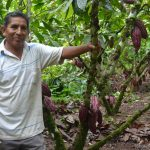 Teodoro Lino: El cacaotero que venció a las plagas