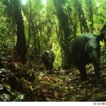 Corroboran presencia de oso andino y tapir en el Santuario Tabaconas Namballe