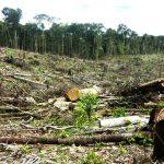 En 2015 el Perú perdió más de 150 mil hectáreas de bosques húmedos