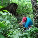 Ponen en consulta norma para formalización de actividad agroforestal