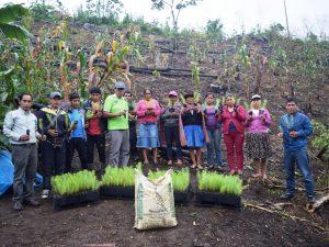 Vraem: Reforestarán 37 hectáreas en Anco
