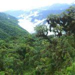 Serfor: Sólo cuatro regiones iniciaron zonificación forestal