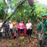 Ucayali: 15 mil familias dejaron la coca y se dedican a cultivos alternativos