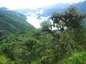 Colombia: Presentarán avances de política forestal peruana