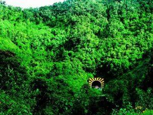 Coordinan creación del área de conservación del Bosque de Carpish