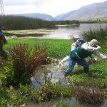 Junín: Realizan jornada de limpieza de humedales en Chupaca