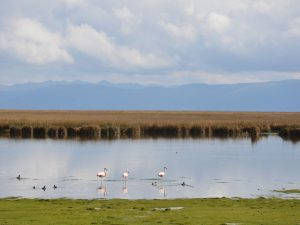 Junín: Realizaron limpieza de lago Chinchaycocha
