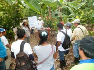 Leoncio Prado: Impulsan optimización de productividad cacaotera