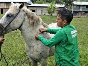 Loreto: Vacunan animales domésticos en zonas afectadas por inundaciones