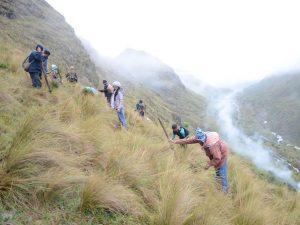 Productores de Aychana participaron en jornada de forestación