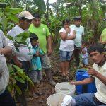 Leoncio Prado: Productores manejan técnicas contra plagas del cacao