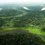 Abrevian procedimiento para otorgar concesiones forestales maderables