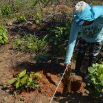 Madre de Dios: Sembraron un millón de árboles de cacao para combatir deforestación