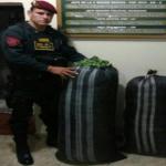 Policía decomisó 90 kilos de hoja de coca en Leoncio Prado
