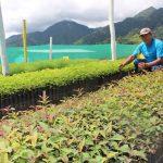 Vraem: Inician recuperación de más de 1 700 hectáreas de suelos degradados