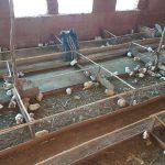 Huánuco: Comunidad de Yacupunta optimizó comercialización de cuyes