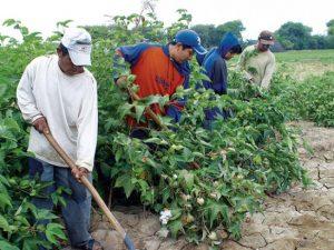 Lanzan aplicación dirigida a pequeños agricultores