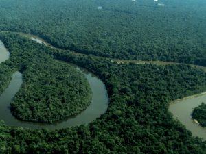 Loreto ya tiene filial de programa de conservación de bosques del Minam