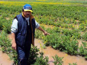 Niño Costero genera S/2 100 millones en pérdidas al agro y la ganadería