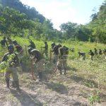 Proyecto Corah erradicó más de 927 hectáreas ilegales en Huánuco y Ucayali