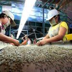 Ucayali: Unos 14 mil pequeños productores podrían acceder al crédito agrario