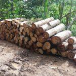 Leoncio Prado: Incautan más de 2 000 pies tablares de material madedero