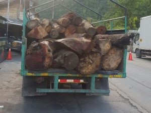 Leoncio Prado: Incautan producto maderable ilegal