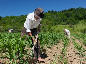 Promueven alfabetización financiera entre productores de nueve regiones