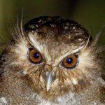 Perú logró ser el segundo país en avistamiento de aves a nivel mundial