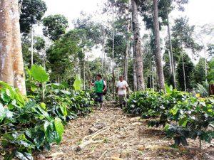 Agrobanco lanza el proyecto Banco Verde