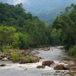 Buscan evitar invasión de las fajas marginales del río Cumbaza