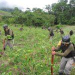 Erradicación de coca ilegal irá de la mano del desarrollo alternativo