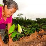 Erradicación de coca ilegal será con desarrollo alternativo y programas sociales