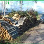 Leoncio Prado: Intervienen cargamento forestal ilegal