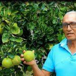 Premiarán a mejores productores agrarios de la región San Martín