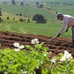 San Martín: Entregarán de títulos de propiedad a 60 agricultores