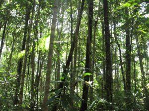 Divulgan resultados sobre gestión sustentable de áreas boscosas